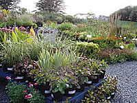 Old withy Garden Nursery
